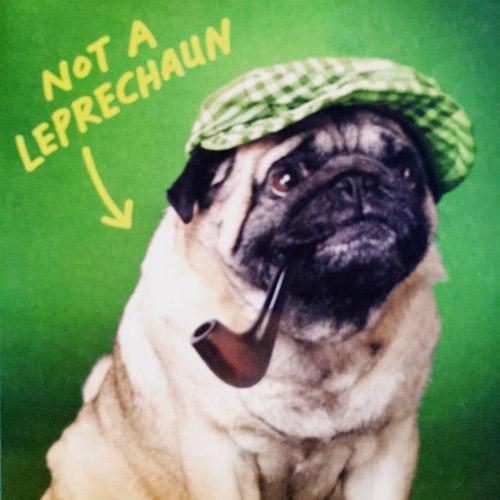 Funny Irish Dog Pug Leprechaun